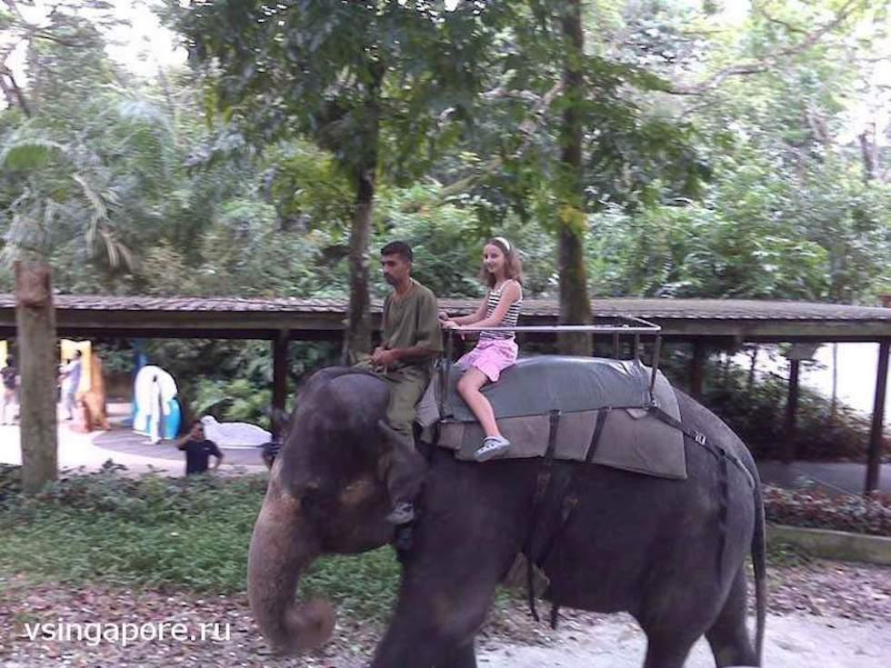Катание на слоне в зоопарке Сингапура