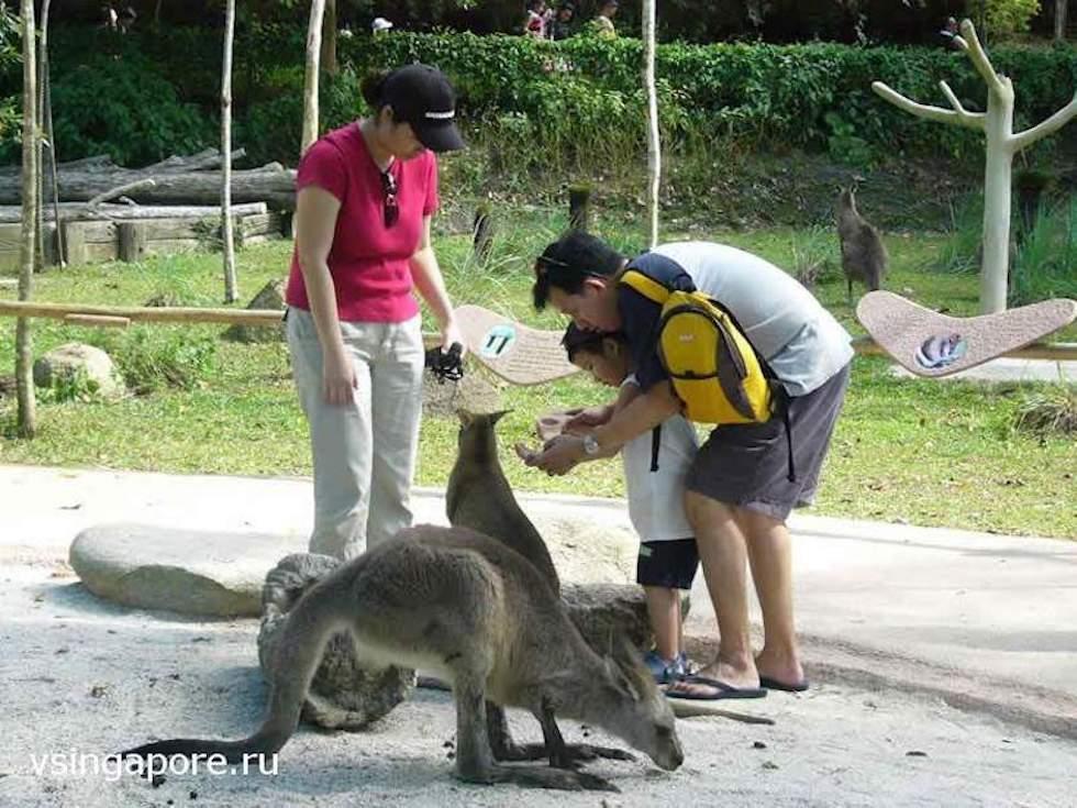 Кормление животных в сингапурском зоопарке