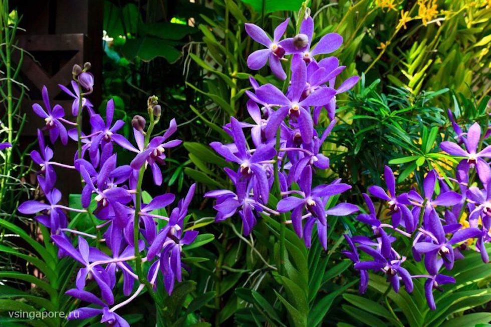 Орхидеи в Сингапурском Саду Орхидей