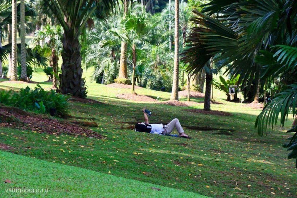 В Ботаническом Саду Сингапура