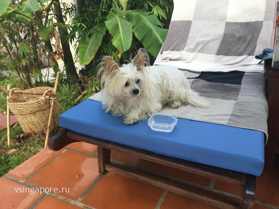 Собака во Вьетнаме
