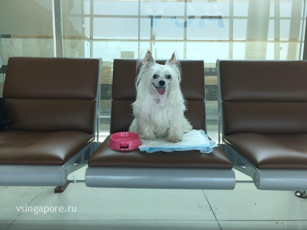 Собака ждет самолет