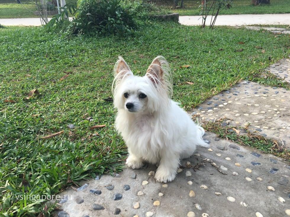 Вьетнам с собакой